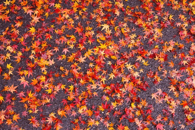 今年も…終わり秋