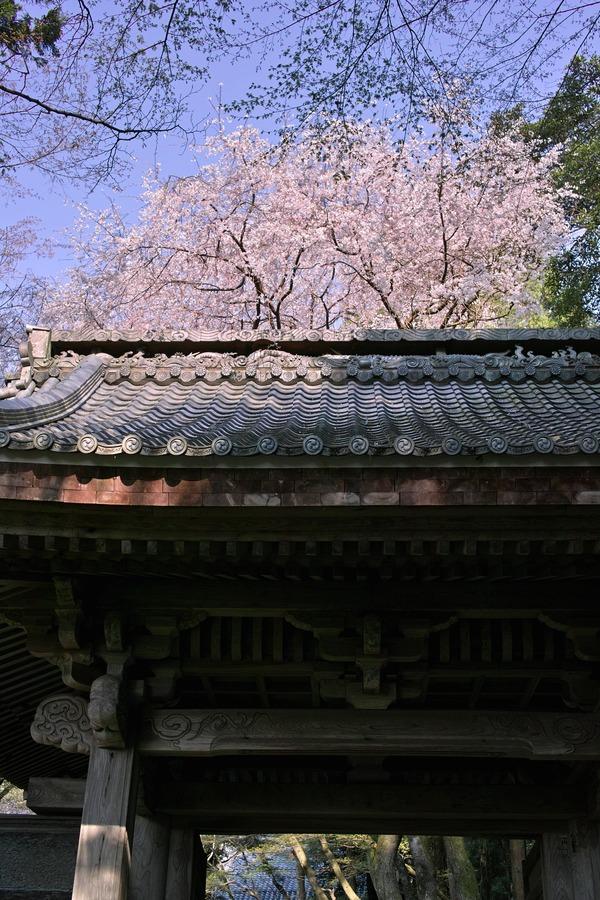 おんな城主直虎の菩提寺2 (彦根の龍潭寺)