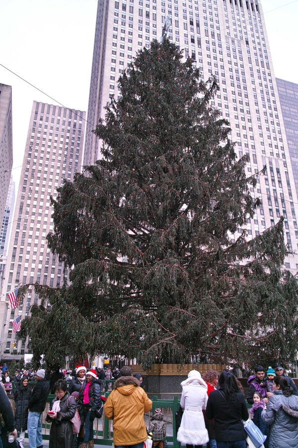 NYC Street Photography 19 (Christmas Trees)