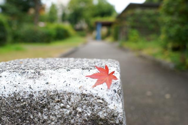 ベイヤーで近所の紅葉