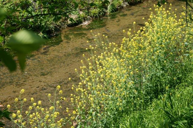 春の小川 (SIGMA 60mm F2.8 DN | Art を試す)