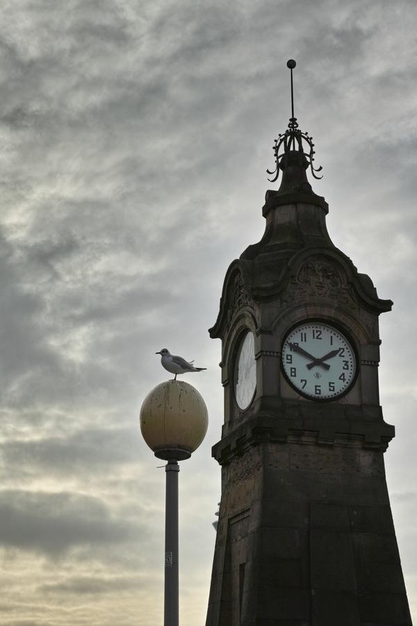 鳥と時計塔