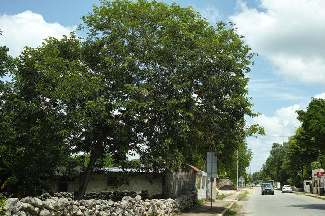 Mayan Streets