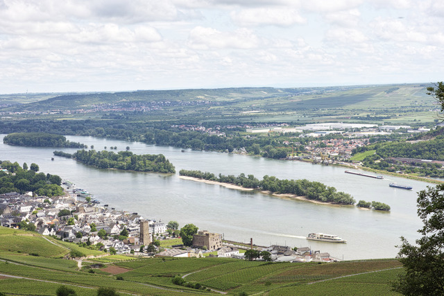 Rüdesheim / Rheingau
