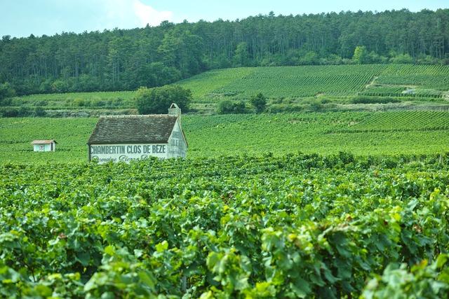 Chambertin-Clos de Bèze (シャンベルタン・クロ・ド・ベーズ)