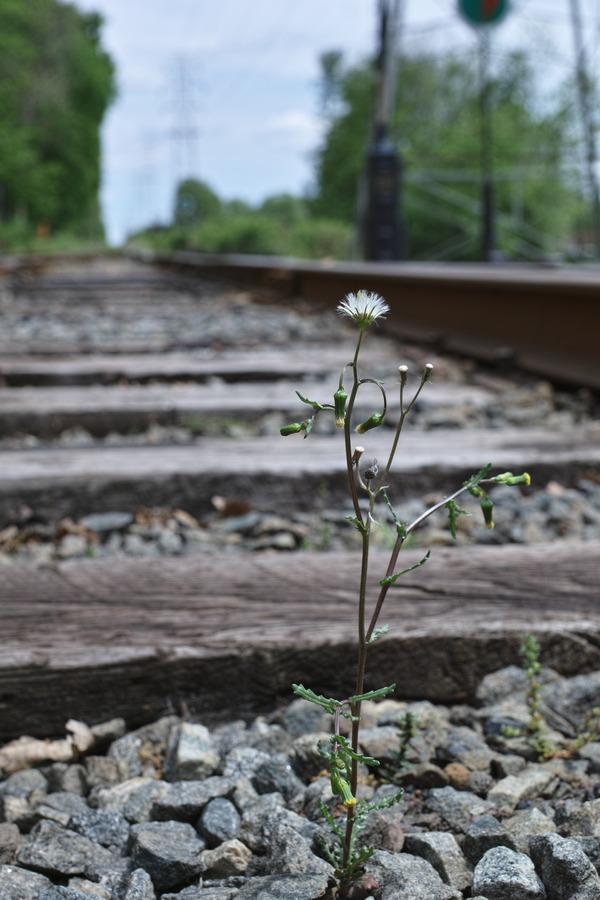 線路に映える