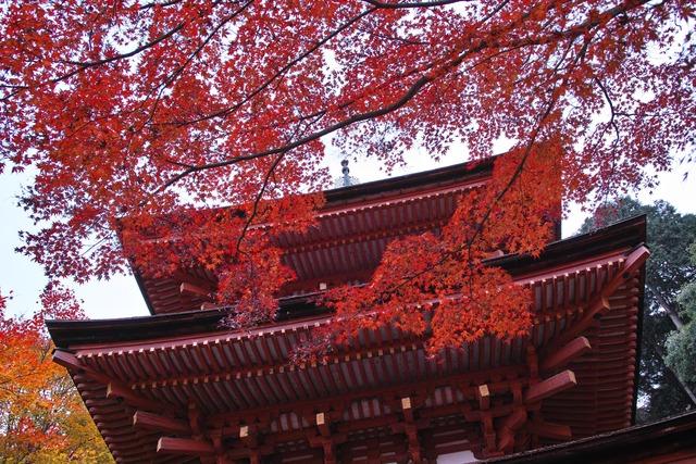 浄瑠璃寺から岩船寺までの秋