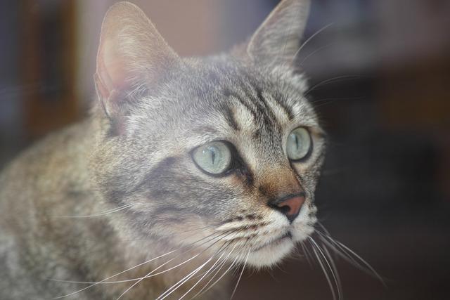 Katze im Schaufenster (猫はショーウィンドウの中)