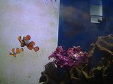 Nemo& Marlin