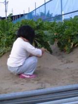 大根畑で砂遊び