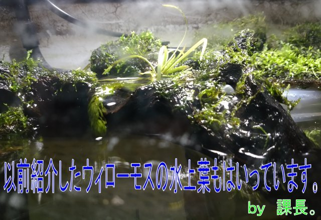 IMG_20160410_201140