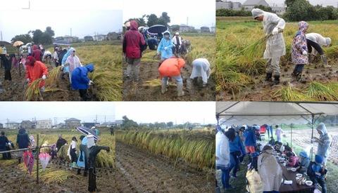 10-21稲刈り体験