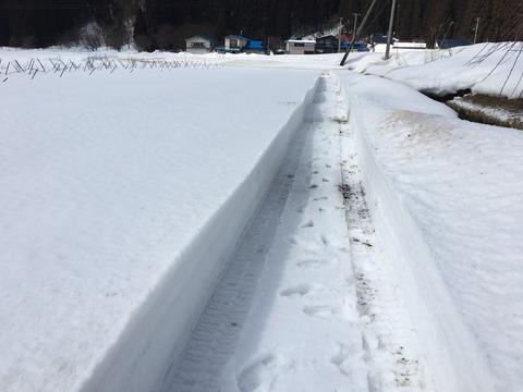 そら豆の定植場所の雪寄せ