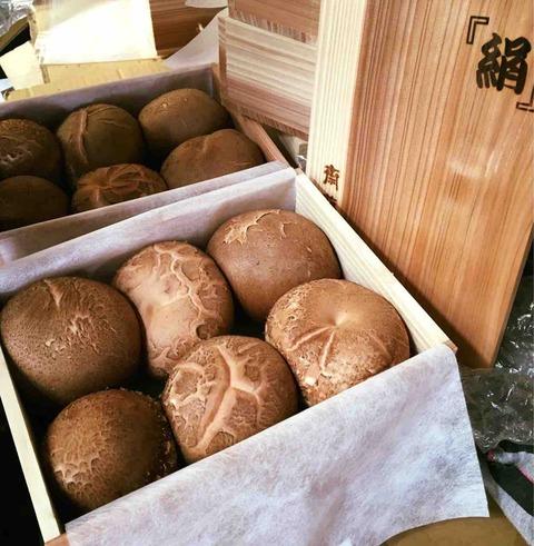 原木椎茸「絹」の販売開始