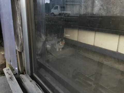 近所の子猫ちゃんの行方