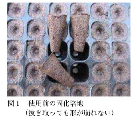 固化培地について