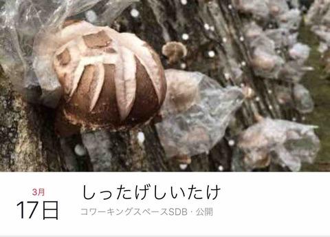 椎茸イベント「しったげしいたけ」3/17