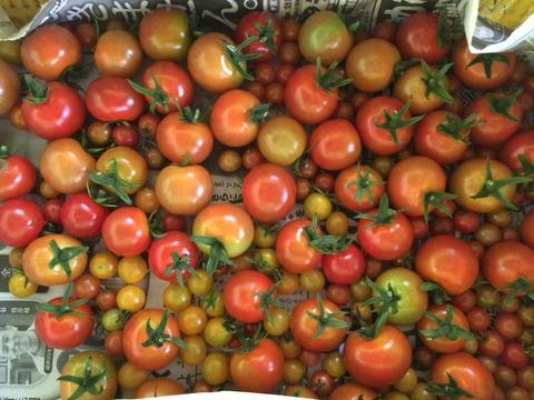 トマトがキラキラしていてきゃっふーん!
