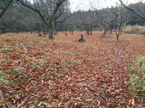 栗林の冬の初期٩(ˊᗜˋ*)و