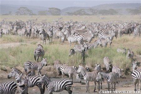 2月7日-17日ケニア・タンザニア 758