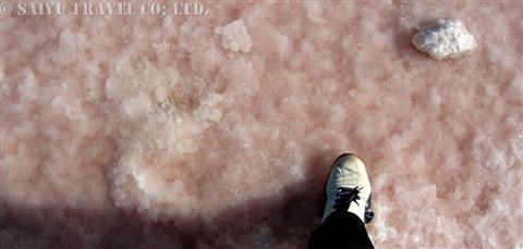 ショットエルジェリドの湖面