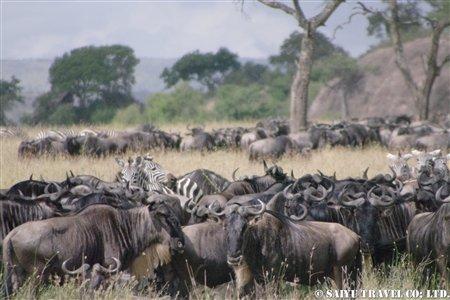 2月7日-17日ケニア・タンザニア 786