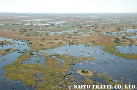 上空から眺めるオカバンゴの大湿原