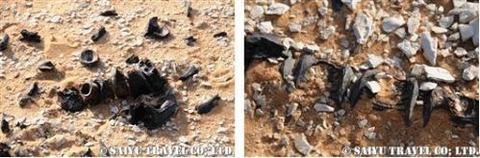メガチャド 魚の化石