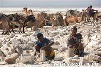 塩の採掘所