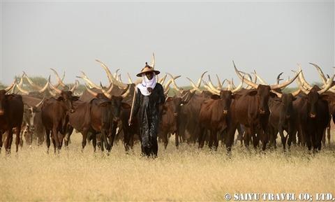 ニジェール ボロロ遊牧民 (1)