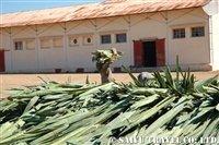 サイザル麻の工場