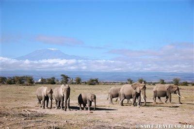 ゾウの群れとキリマンジャロ