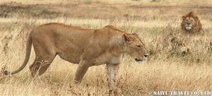ンゴロンゴロ自然保護区にて