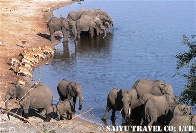 アフリカゾウの画像 p1_21