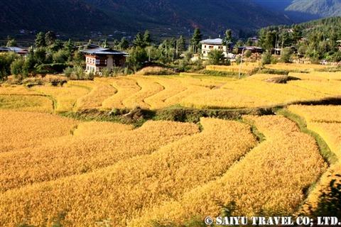aki_bhutan (2)