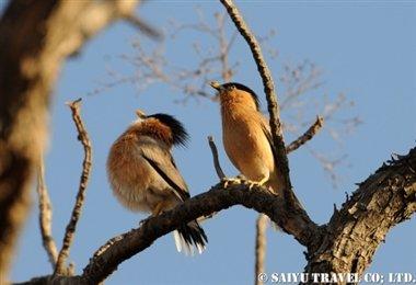 ササンギル インドの森 (6)