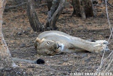 ササンギル インドの森 (3)