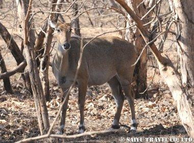 ササンギル インドの森 (9)