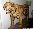カンケールのトラ