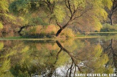 ケオラディオ国立公園Keoladeo (3)