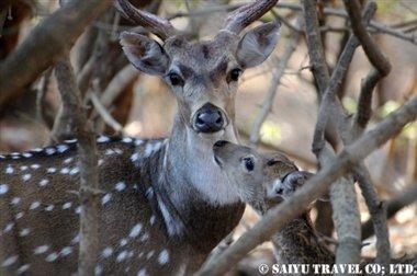 ササンギル インドの森 (8)
