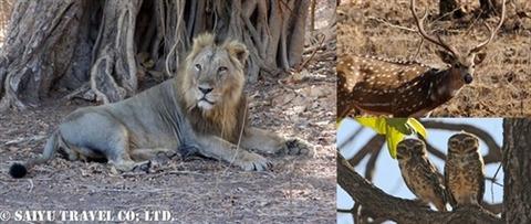 ササンギル インドの森 (1)