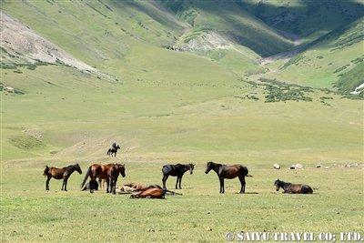 キルギス カルカラ谷 西遊旅行 (2)