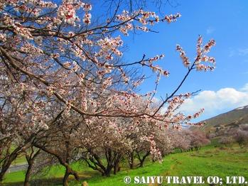 野花咲く春の北西部