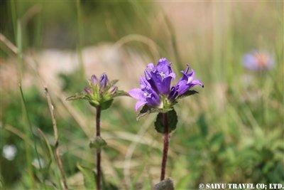 ⑦【キキョウ科の花】KW2A2113