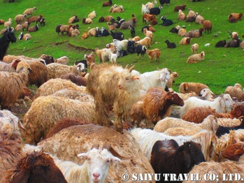 放牧の風景
