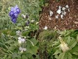 伊吹の花畑
