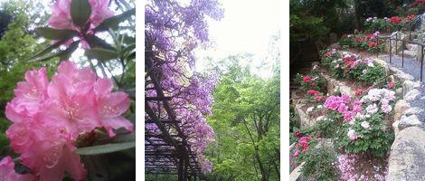 石山寺5月