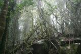 スプリングブルックの森林
