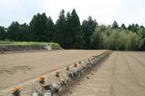 乳酸菌生成エキスの大豆畑